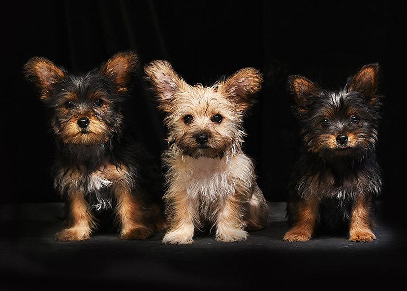 3 frères